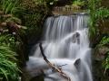 SA935 Waterfall Clyne Gardens