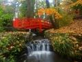 SA73 Autumn Clyne Gardens