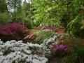 SA82 Spring 2020 Clyne Gardens