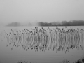 BBA968 Reeds & Fog Brecon