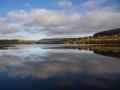 BBA967 Autumn Llwyn On