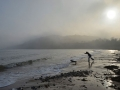 GA214 In The Mist Langland