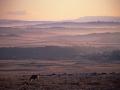 GCC08 Dawn Mist Cefn Bryn