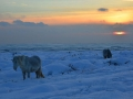 GCC28 Winter sunset Cefn Bryn