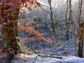 SB27 Frozen Leaves Clyne Valley