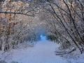 SB25 Winter Path Clyne Valley