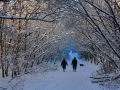 SB26 Winter Path Clyne Valley