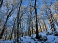 SB29 Winter Woodland Clyne Valley