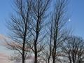 SB22 Bare Trees 3 Ashleigh Road