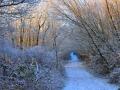 SB24 Winter Path Clyne Valley