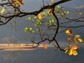 WNS27 Autumn Llyn Dinas