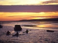 GD25 Rowing Ashore Penclawdd
