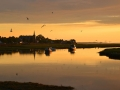 GD33 Evening Gold Penclawdd