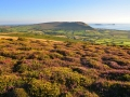 GD06 Autumn Carpet Llanmadoc Hill