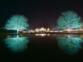 WSVG77 Winter Lights Dyffryn Gardens, nr Cardiff