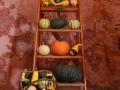 WSVG82 Pumpkins Dyffryn Gardens