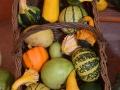 WSVG81 Pumpkins Dyffryn Gardens