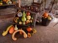 WSVG84 Pumpkins Dyffryn Gardens