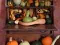 WSVG80 Pumpkins Dyffryn Gardens